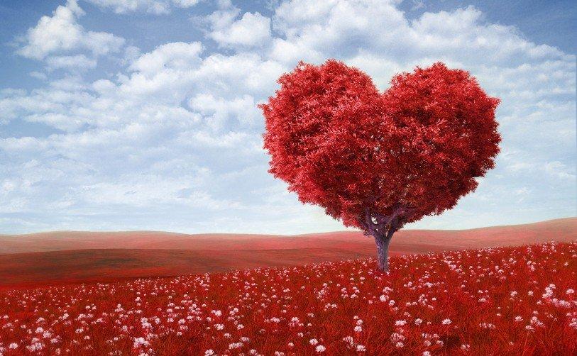 Cosenza, San Valentino si tinge di rosa (VIDEO)