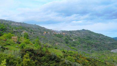 Photo of Il Parco Nazionale della Sila candidato come patrimonio dell'Unesco