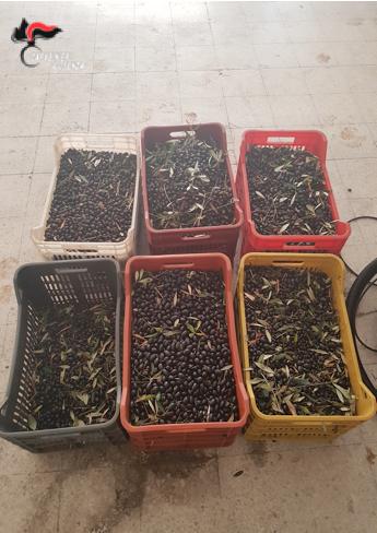 Cassano all'Jonio, furto di olive: arrestate due persone