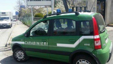 Photo of Controlli agroalimentari dei carabinieri Forestali. Sanzioni per 7500 euro