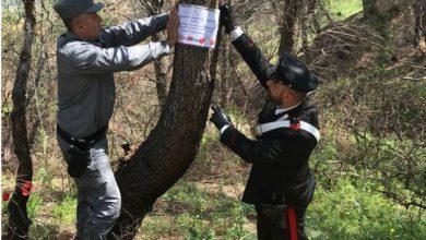 Photo of Alto Jonio, attività d'indagine sugli incendi boschivi. Sigilli dei carabinieri Forestali