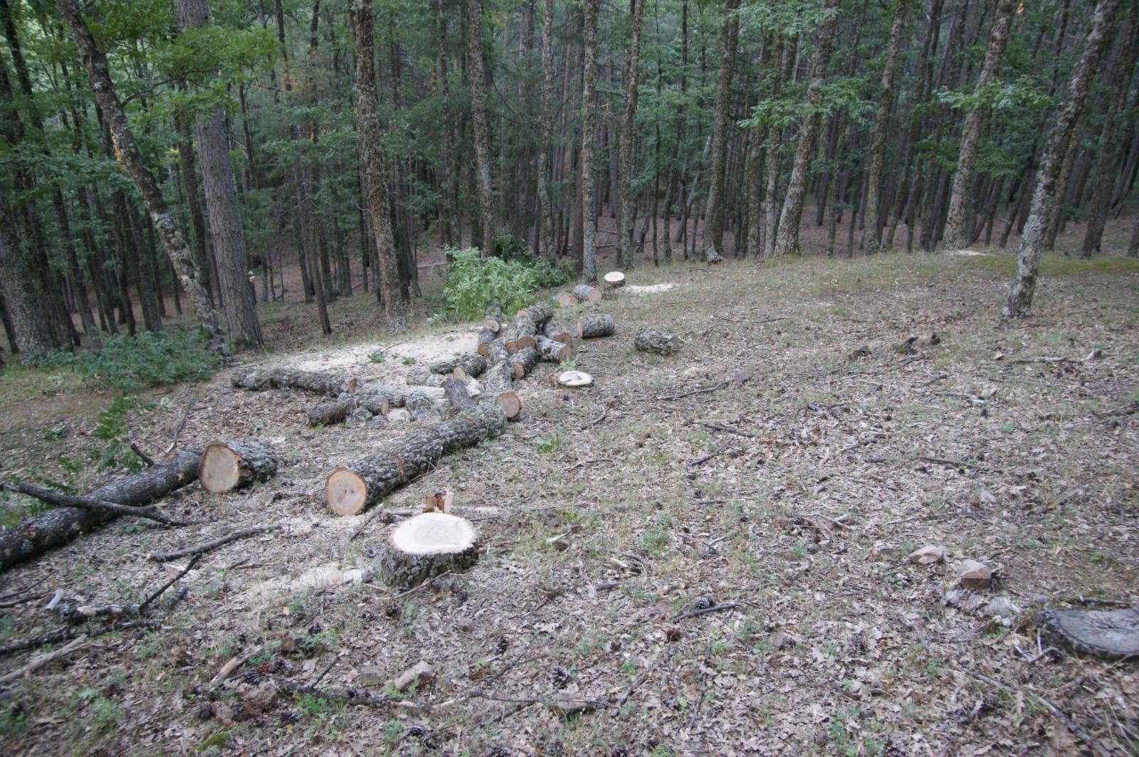 Sorpreso dai carabinieri a tagliare abusivamente alcuni alberi: arrestato