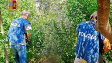 Photo of Spaccio di droga a Corigliano Rossano, arrestate quattro persone