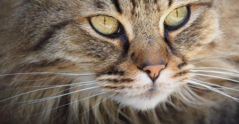 Gatto entra in classe: ucciso a bastonate