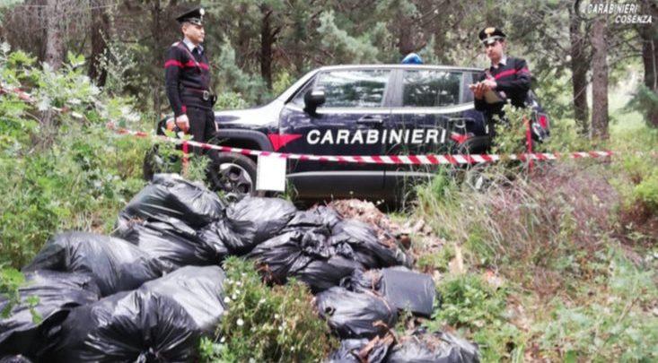 San Demetrio Corone rifiuti speciali