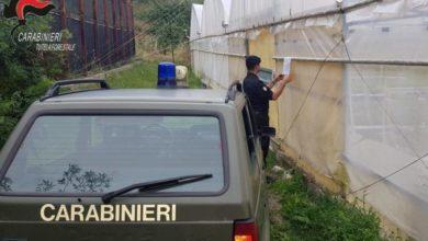 Photo of Oriolo: occupazione area demaniale. Sequestrato agrumeto e due serre