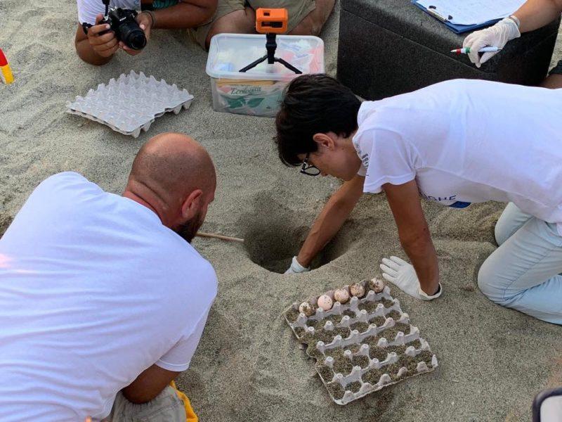 Nido di tartarughe a Marina di Sibari, ecco l'eccezionale scoperta del WWF