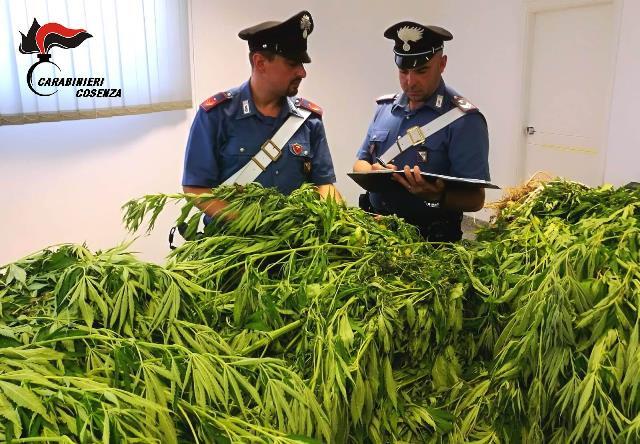 "Scoperta piantagione di ""marijuana"" a San Martino di Finita, due arresti"