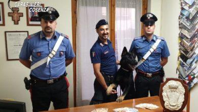 Photo of Spaccio di droga nell'Alto Tirreno cosentino, arrestate due persone
