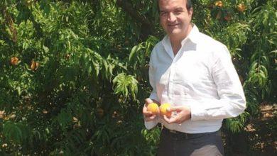 Photo of Occhiuto: «Rapporto Svimez devastante per la Calabria. Ecco la mia proposta»