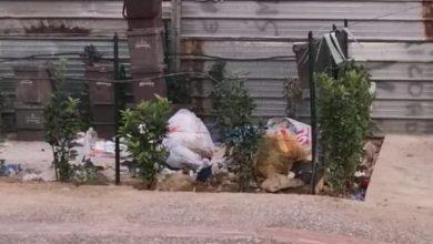 Photo of Cosenza, invasione di topi: ecco il video shock (nei pressi di via Popilia)