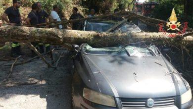 Photo of Albero cade mentre passa un'auto: ferita la moglie del conducente