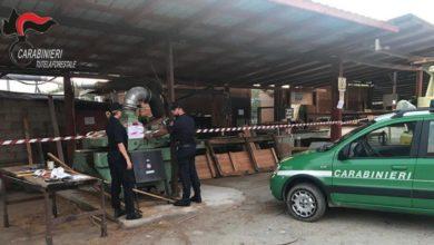 Photo of Montalto Uffugo, sequestrata segheria abusiva: indagine dei carabinieri forestale