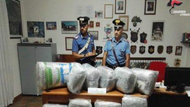 """Photo of Villapiana, """"corriere della droga"""" beccato con 55 chili di marijuana"""
