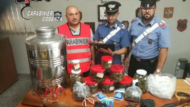 Photo of Belvedere Marittimo, incensurato deteneva oltre un chilo di marijuana