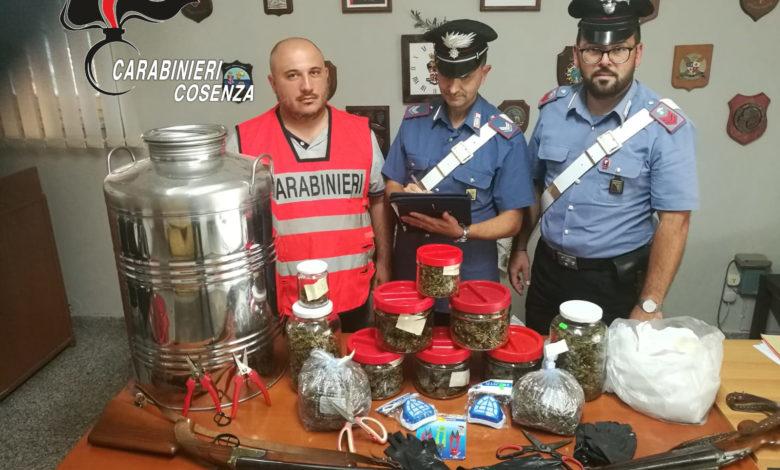 Belvedere Marittimo, incensurato deteneva oltre un chilo di marijuana