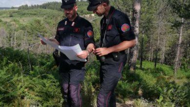 Photo of Truffa aggravata a San Giovanni in Fiore, indagate tre persone. Ecco le accuse