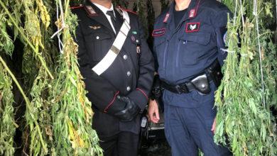 """Photo of A Bonifati la marijuana """"made in Calabria"""": arrestati padre e figlio"""