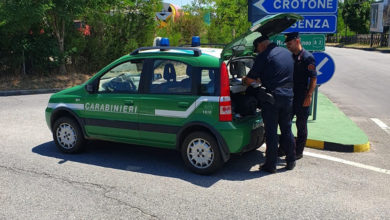 Photo of Frantoio di Corigliano Rossano, controlli dei carabinieri forestale