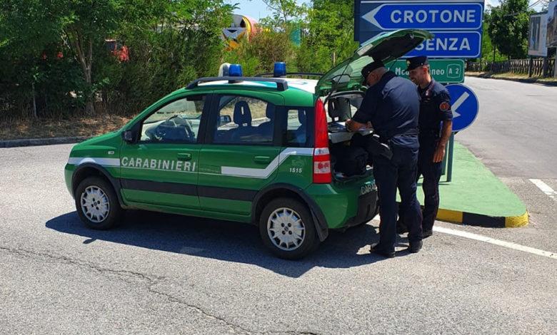 Frantoio di Corigliano Rossano, controlli dei carabinieri forestale
