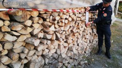 Photo of Verbicaro, tre persone denunciate per ricettazione di materiale legnoso