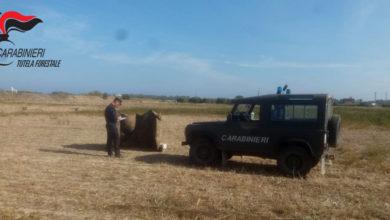 Photo of Villapiana: a caccia con richiami vietati, tre persone denunciate