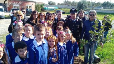 Photo of Festa dell'Albero, le iniziative dei Carabinieri Biodiversità