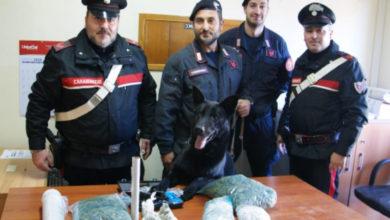 Photo of Buonvicino, i carabinieri trovano oltre un chilo di droga: arrestato 29enne