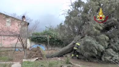 Photo of Maltempo in provincia di Cosenza, alberi sradicati: a Montalto tanti danni
