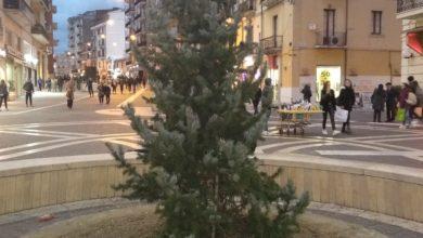 """Photo of A Cosenza un """"albero per Cesare"""""""