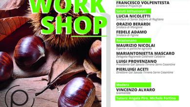 Photo of Settore Castanicolo del Savuto, focus sui prodotti biologici regionali