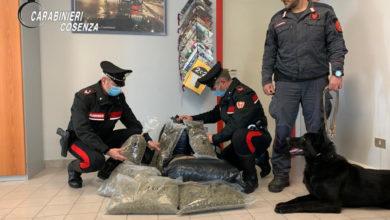 Photo of Cetraro, blitz dell'Arma: trovati 15 kg di marijuana. Due arresti