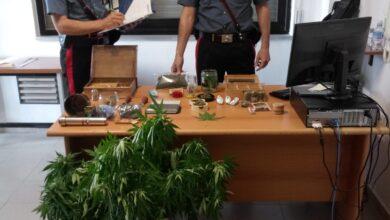 Photo of San Demetrio Corone, avevano il monopolio sulla marijuana: 4 arresti