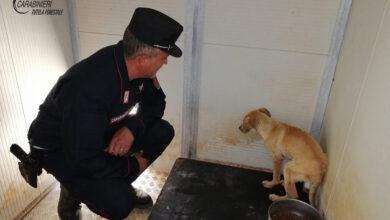Photo of Trebisacce, cane ferito ad una zampa recuperato in campagna dai Carabinieri Forestale