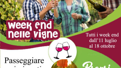 Photo of Weekend nei vigneti: Mtv Calabria rilancia l'enoturismo