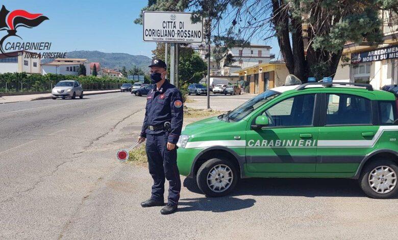 Carabinieri Forestale Corigliano
