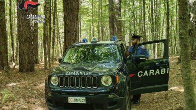 Photo of Camigliatello Silano, due arresti e una denuncia: l'attività dei carabinieri