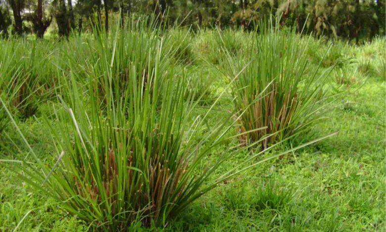 Ambiente: quali sono le piante più promettenti per la bonifica di terreni inquinati?