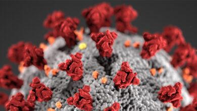 Coronavirus in Calabria, sono 426 i nuovi contagi nelle ultime 24 ore