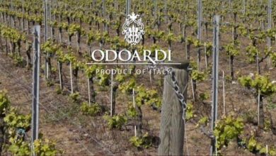 """Sequestro azienda vinicola """"Odoardi"""", la Cassazione annulla con rinvio"""