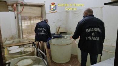 Cosenza, prodotti alcolici di contrabbando: sequestrata fabbrica cinese