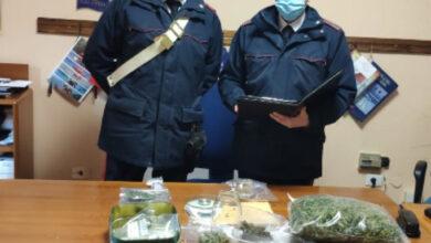 Grisolia, piantine di marijuana sul balcone: coniugi arrestati