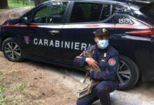 Sila, cucciola di capriolo salvata dai carabinieri del Reparto Parco VIDEO